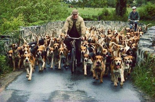 Административная Ответственность за Выгул Собак