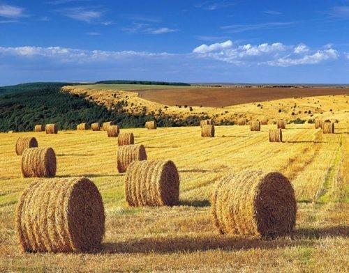 Банкротство Сельскохозяйственных Предприятий