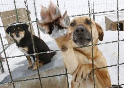 Юридическая помощь животным