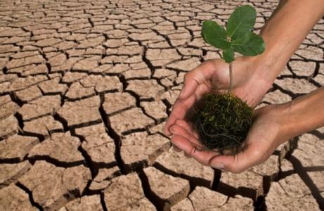 Возмещение экологического ущерба